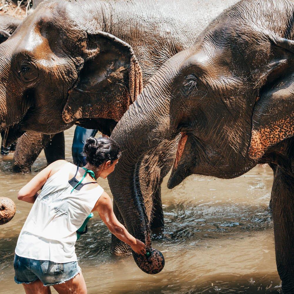 Elephant Nature Park, Chiang Mai, Tailândia - alimentando elefante