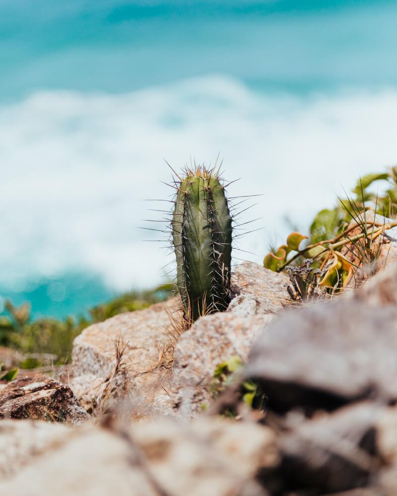 Cacto fotografado na Praia Brava