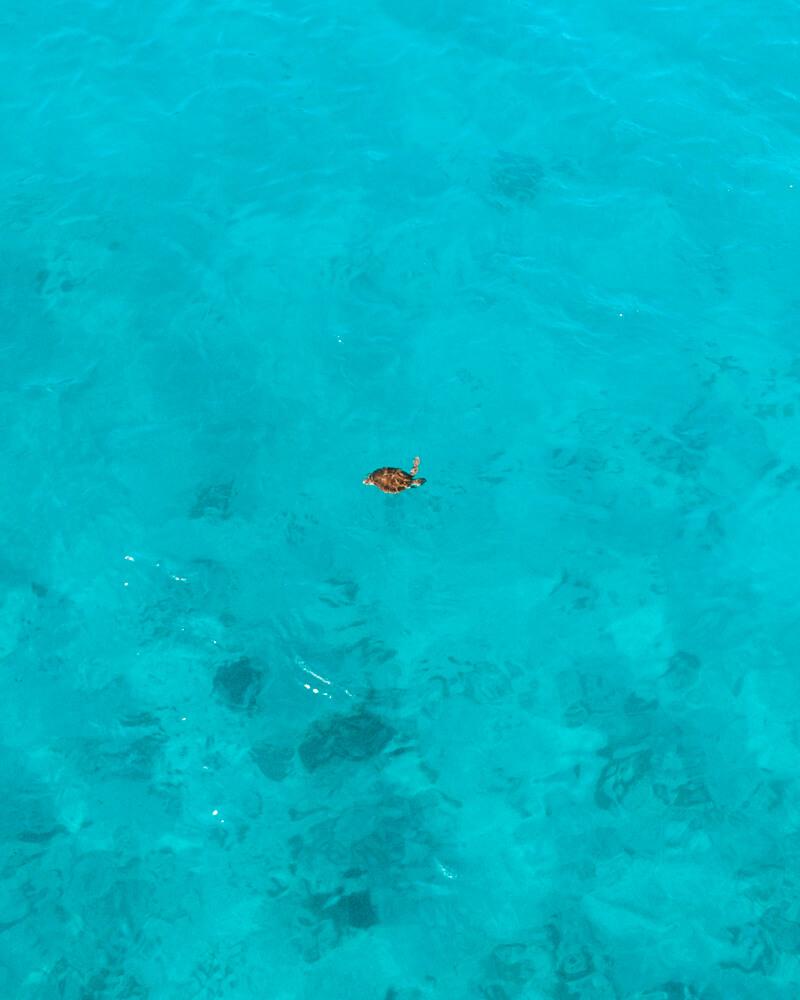 Tartaruga marinha na praia do forno