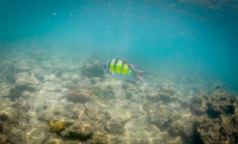 Peixinho visto na praia de Hong Island