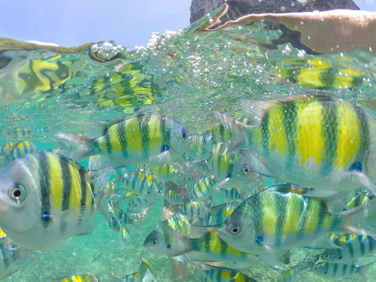 Muitos peixes no Shark Point - Phi Phi Island