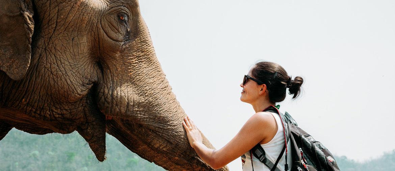 Elephant nature park | Viajando na Janela