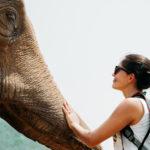 Elephant Nature Park, um Santuário de elefantes na Tailândia