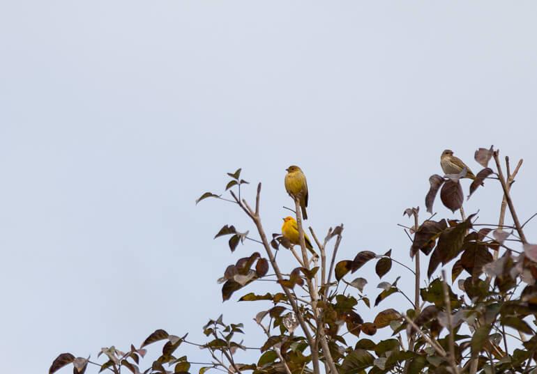 Alguns passarinhos