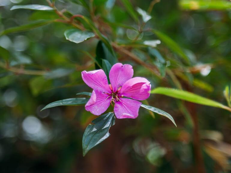 Florzinha no detalhe