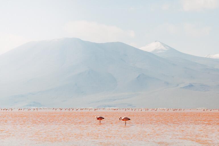 Flamingos ...