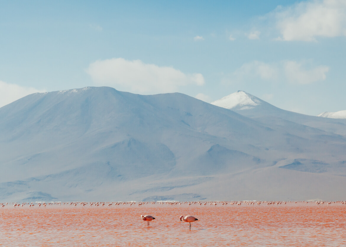 Flamingos na Laguna Colorada, vistos durante a travessia do Salar de Uyuni