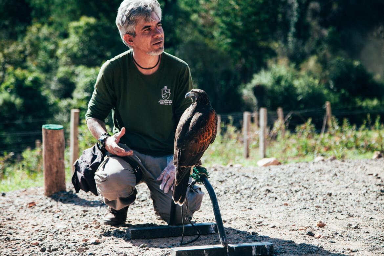 Uma verdadeira aula de educação ambiental com o Riuvânio, responsável pela Escola de Falcoaria de Monte Verde