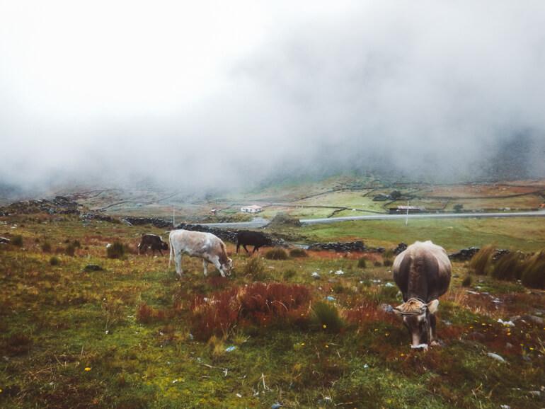 Estrada da Morte, Bolívia: paisagem