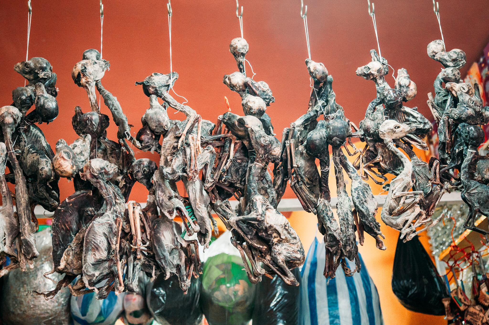 Mercado das Bruxas de La Paz - fetos de lhamas