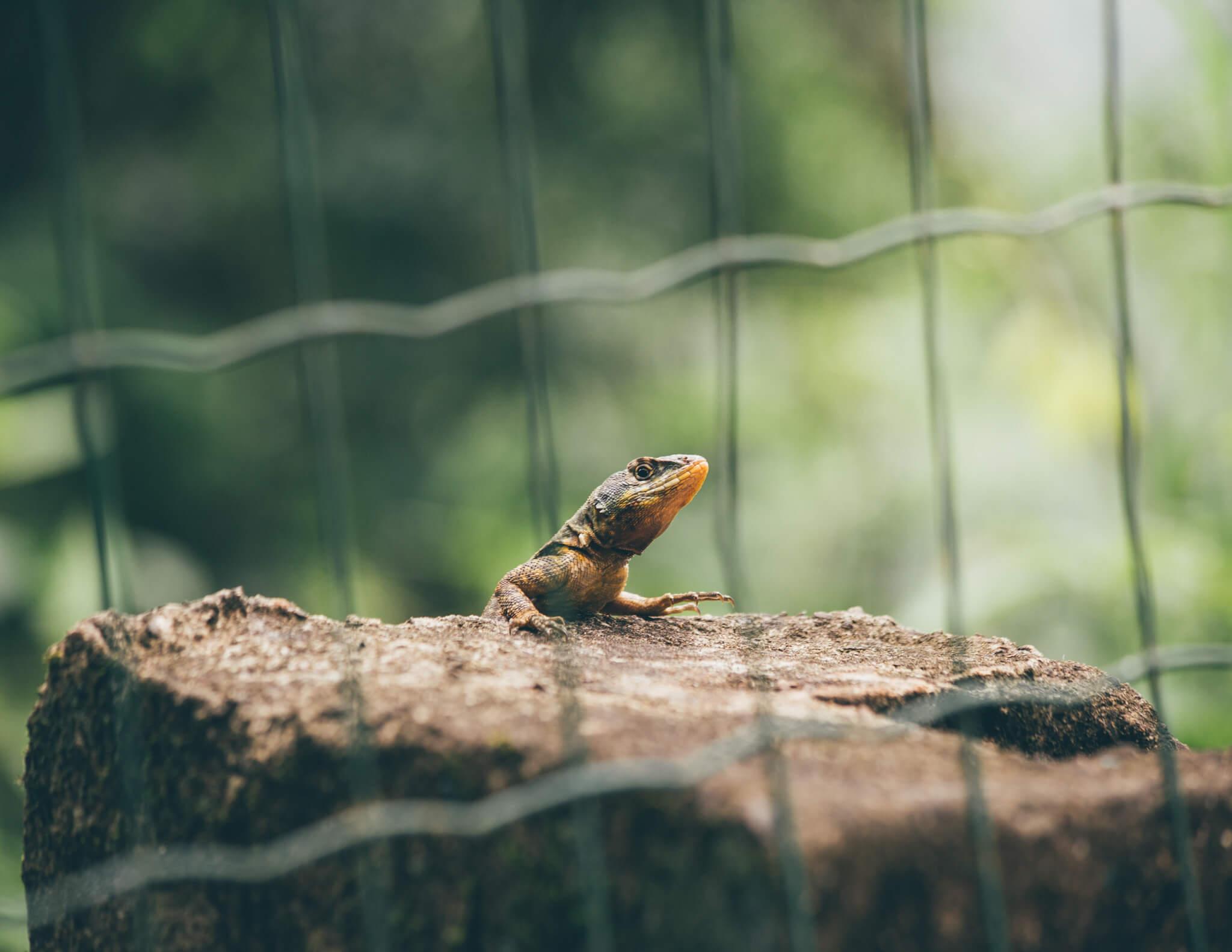 Um dos vários moradores do Parque Nacional do Iguaçu