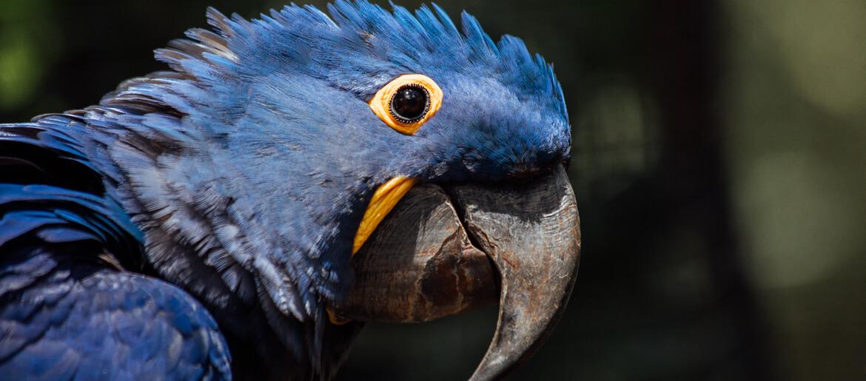 Parque das Aves: Saiba todos os detalhes deste passeio incrível!