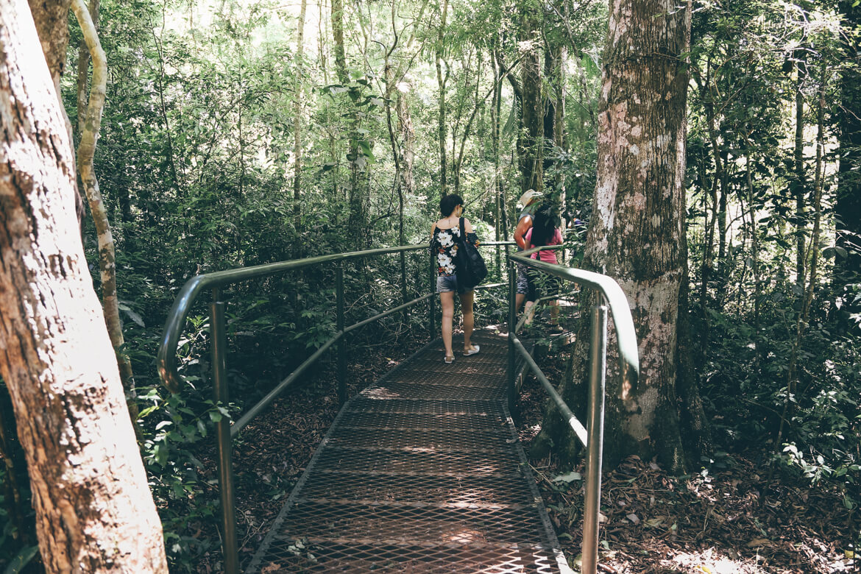 Macuco Safari: Trilha suspensa
