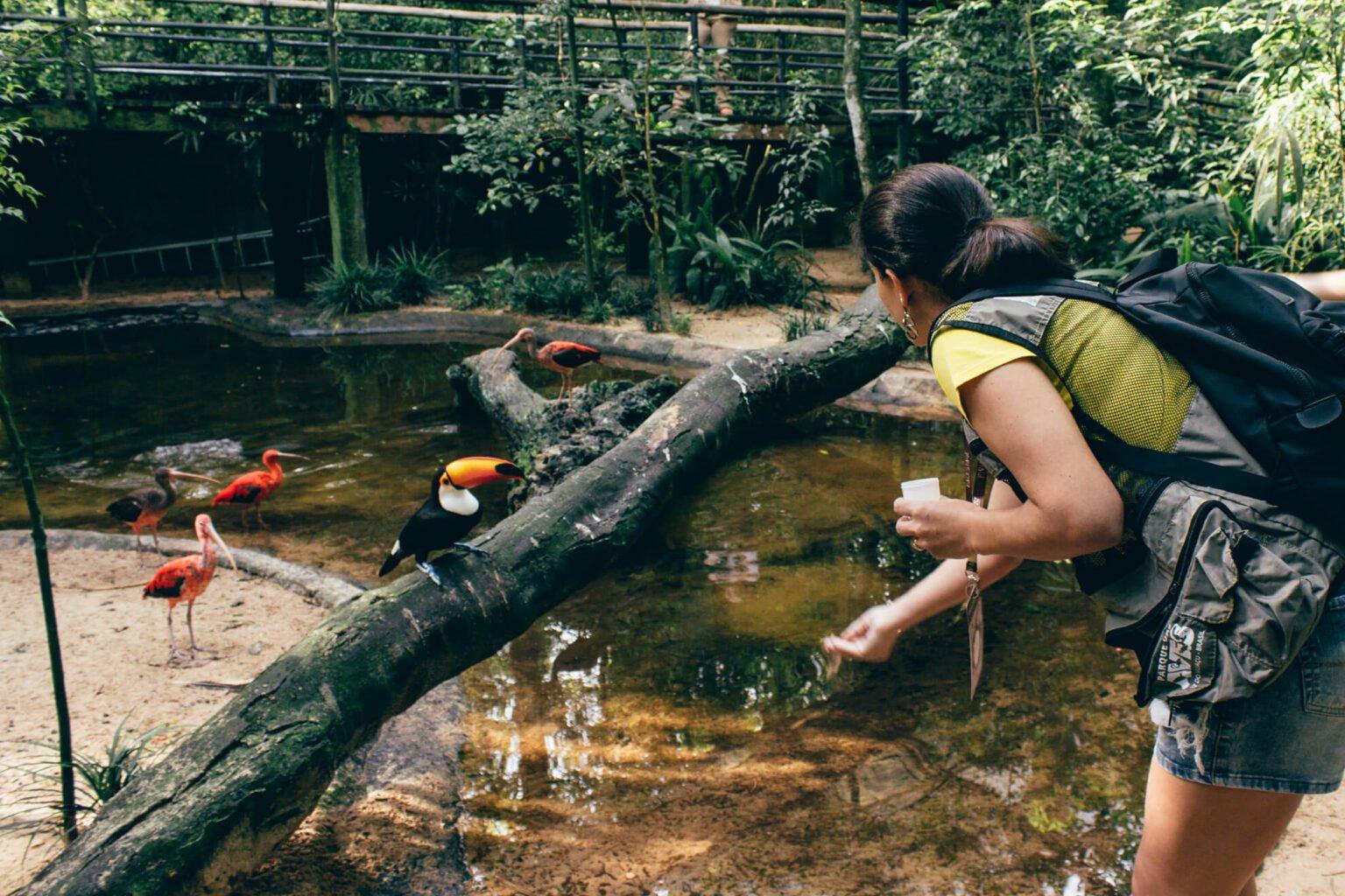 Alimentando os tucanos no viveiro Aves de Rios e Mangues