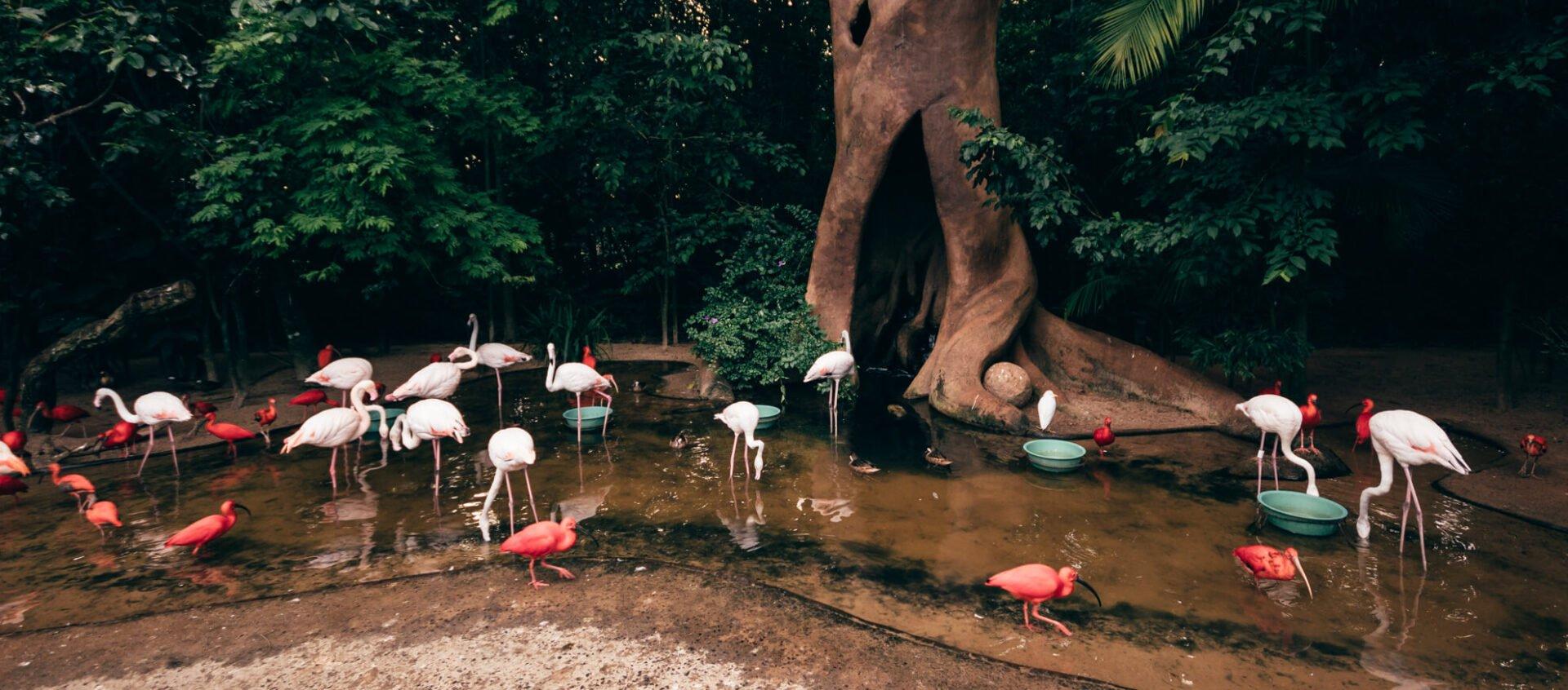 Viveiro Árvore da Vida, onde alimentamos os guarás e os flamingos