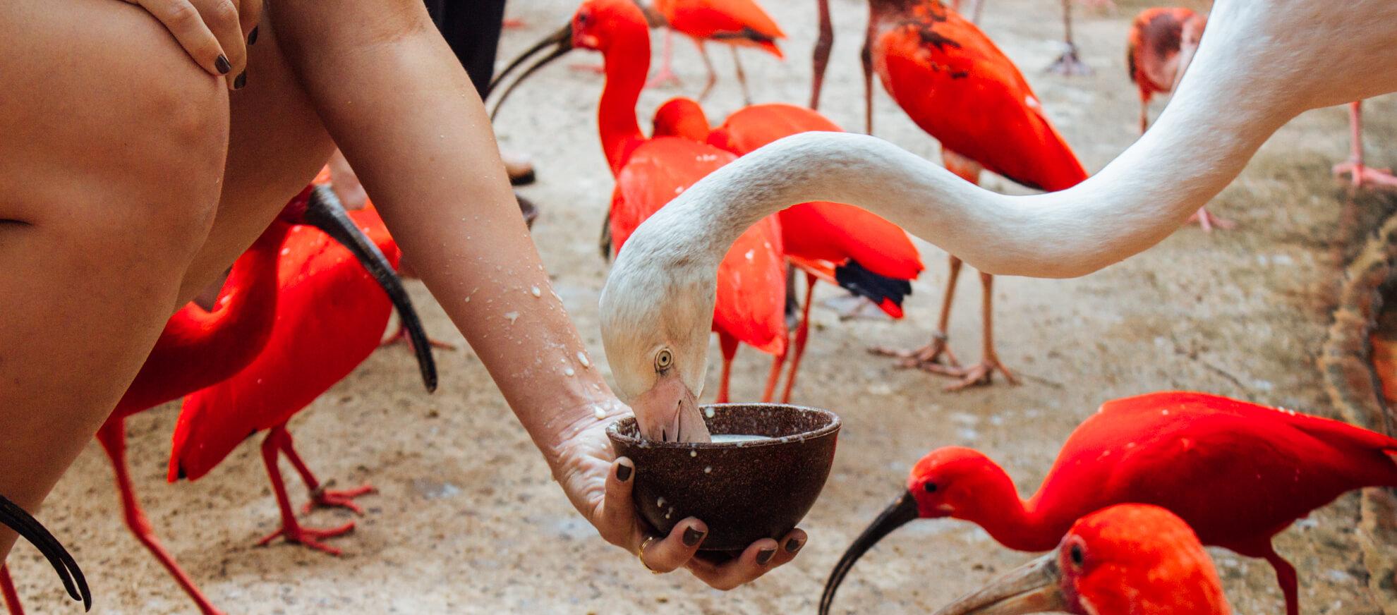 Alimentando flamingos e guarás, Backstage Experience, Parque das Aves