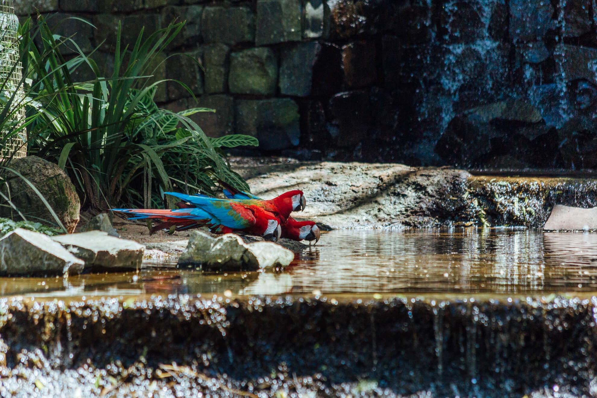 Parque das Aves, Foz do Iguaçu | viveiro das araras