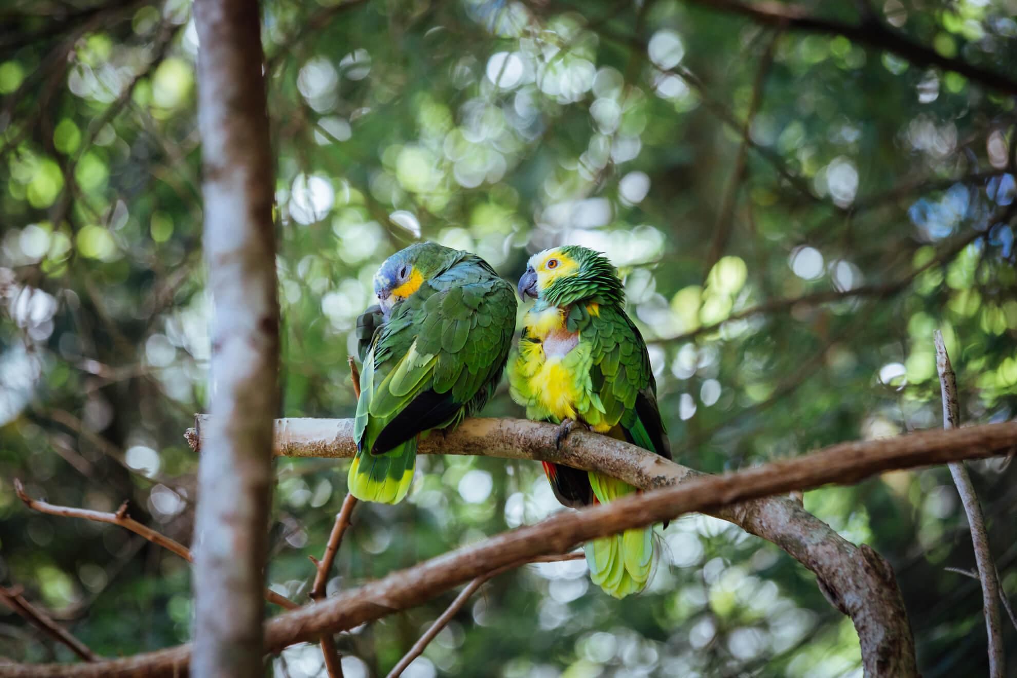 Parque das Aves, Foz do Iguaçu | papagaios resgatados