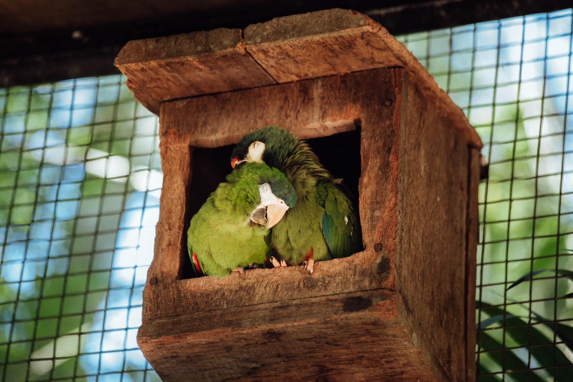 Parque das Aves, Foz do Iguaçu | casal de araras