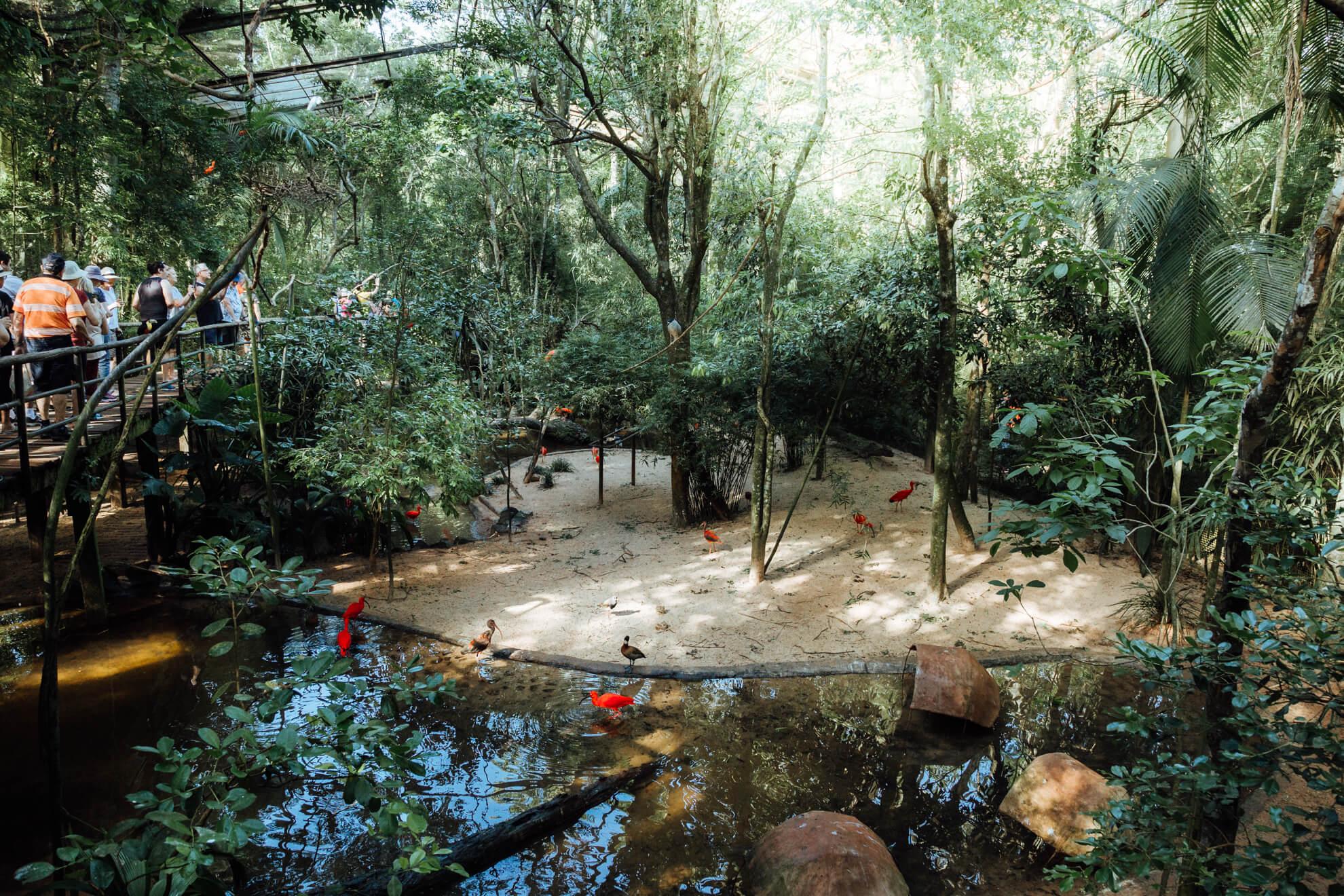 Parque das Aves, Foz do Iguaçu | Aves de Rios e Mangues