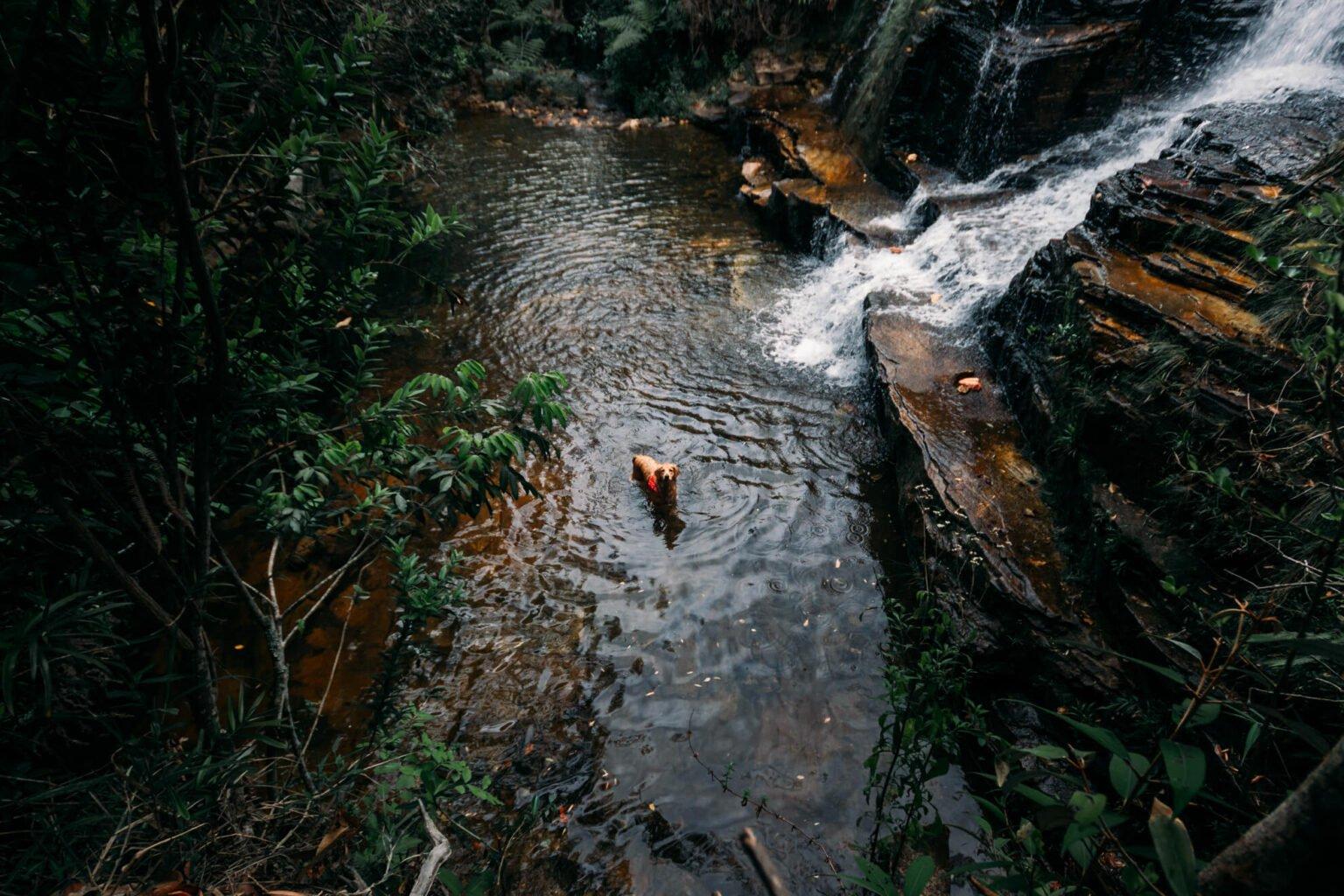 Maya (uma das nossas duas cachorrinhas) curtindo um banho na Cachoeira Salomão (Complexo da Ponte)