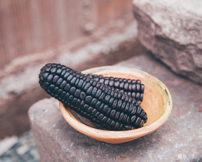 Milho Culli, utilizado na produção da bebida chicha morada