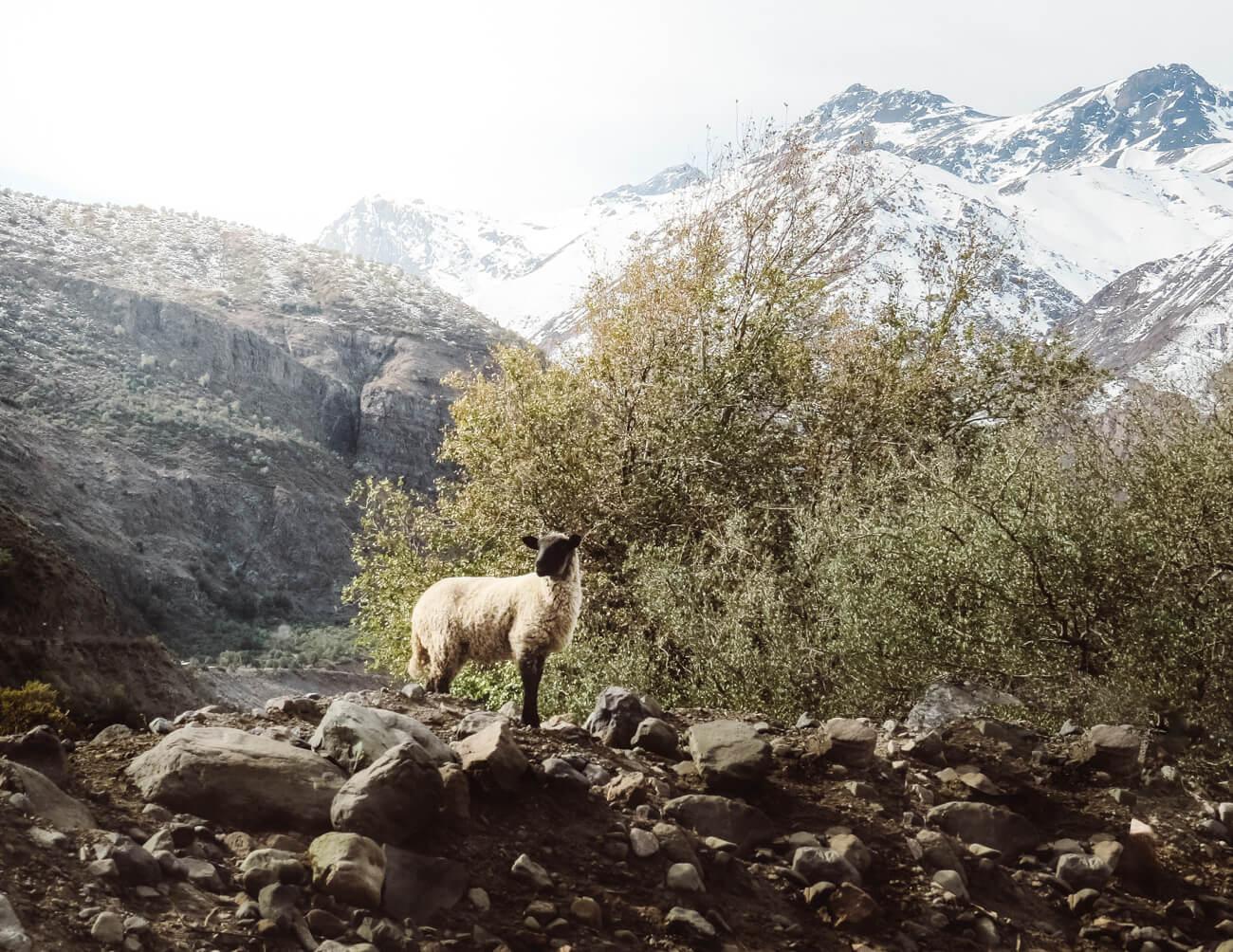 Caminho para Embalse el Yeso (Cajón del Maipo - Chile)