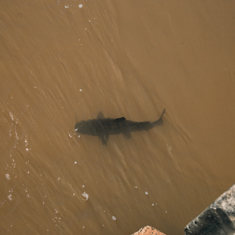 Tartaruguinha no rio | Cataratas Argentinas
