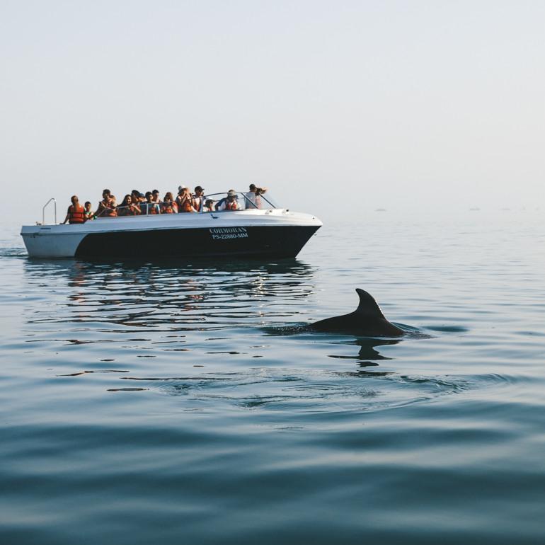 Ilhas Ballestas: golfinho