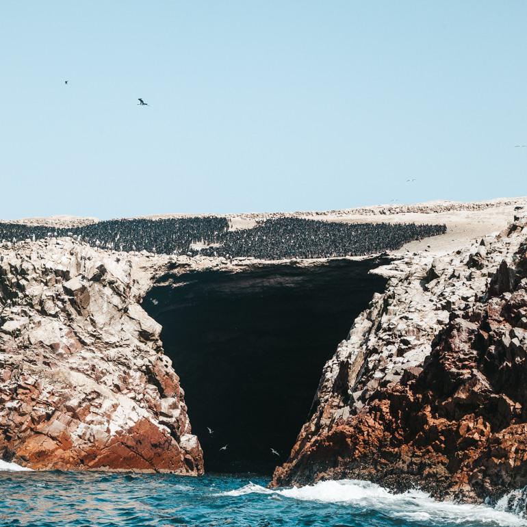 Paracas: Quantidade imensa de aves nas Islas Ballestas