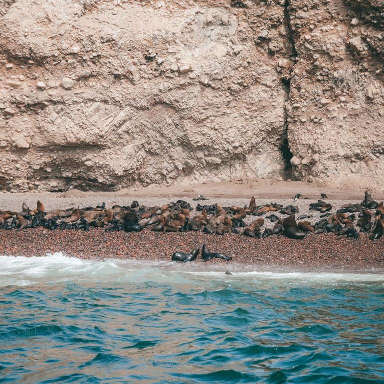 Islas Ballestas - Praia que serve como maternidade para os leões e lobos marinhos