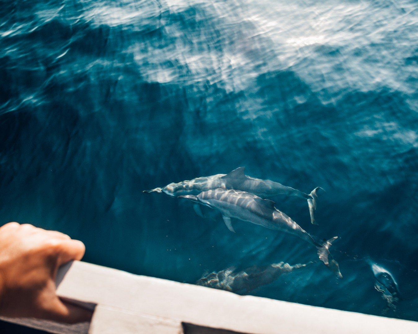 Komodo - golfinhos vistos no passeio de barco