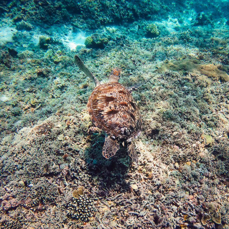 Komodo, Indonésia - tartaruga