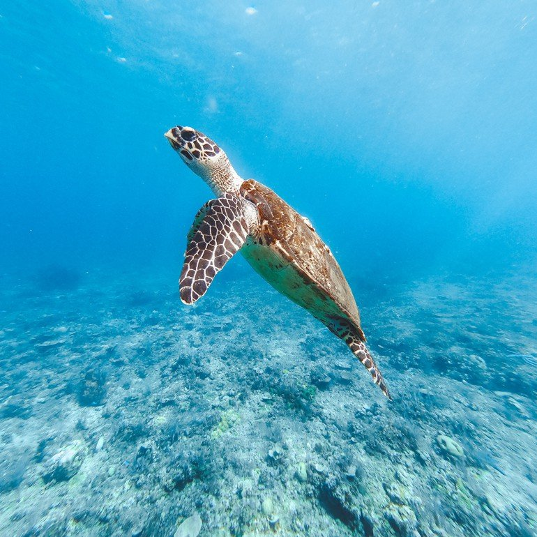 Komodo, Indonésia - Tartaruga Marinha