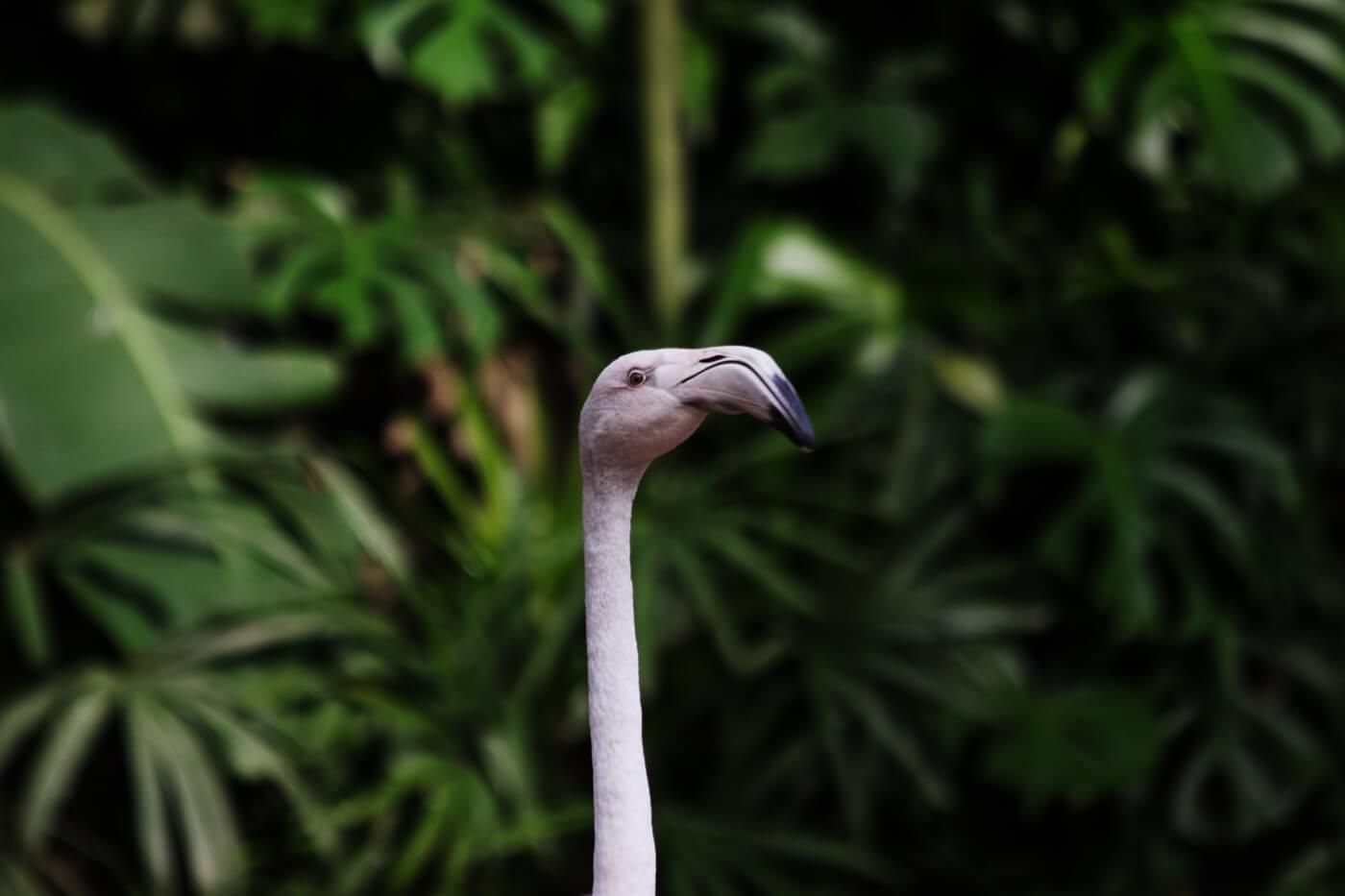 o que fazer em Foz do Iguaçu - flamingos <3