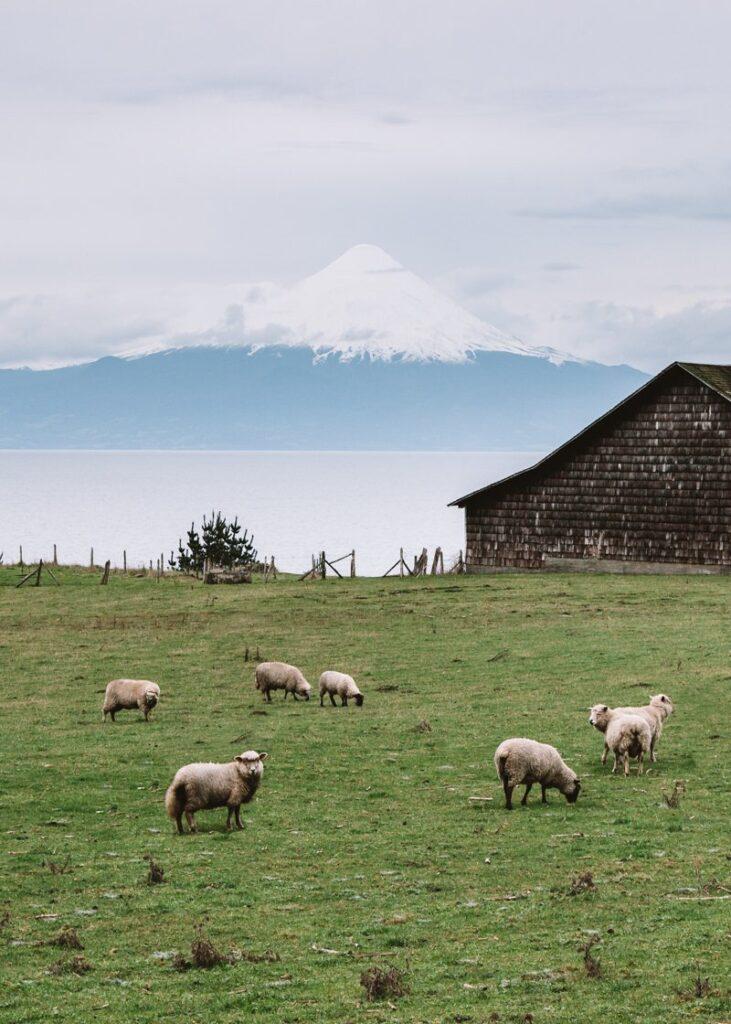 Puerto Varas: Paisagem Linda com o Osorno ao fundo