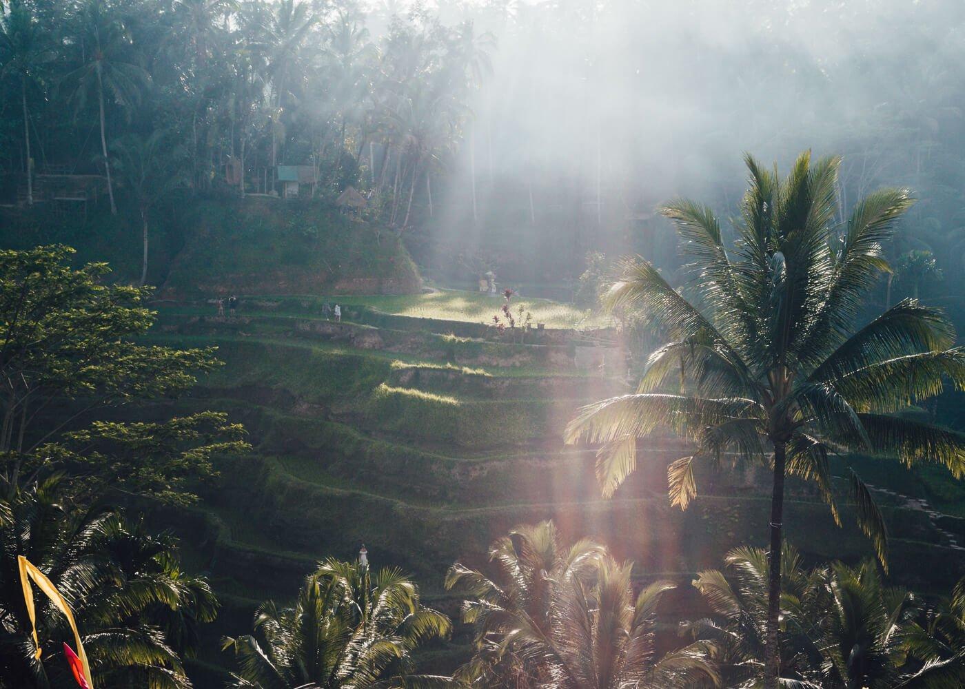 Primeiros raios de sol iluminando os Terraços de Tegallalang