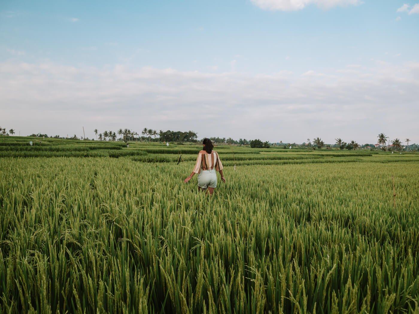 Campo de Arroz em Canggu, Bali