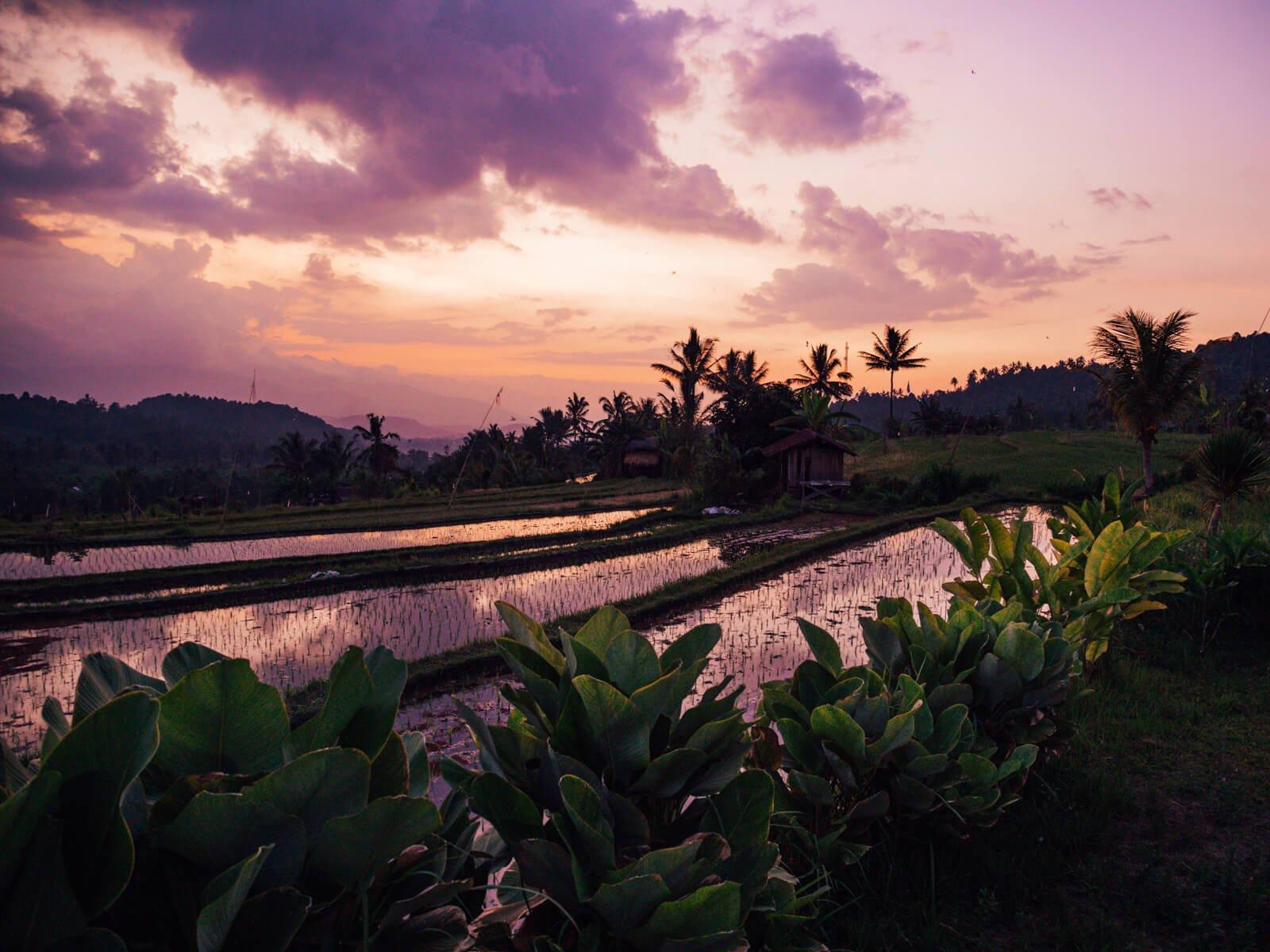 Onde ficar em Bali - Entardecer nos terraços de arroz em Munduk