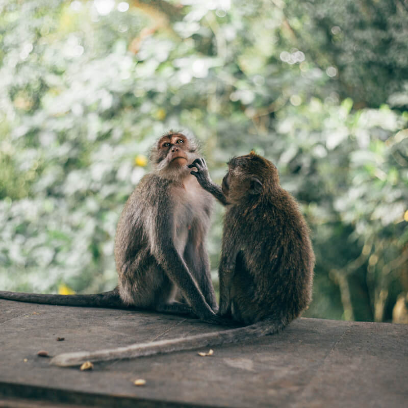Onde ficar em Bali - Monkey Forest