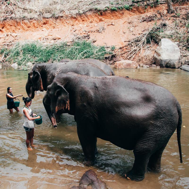 Elephant Nature Park, Chiang Mai, Tailândia - banho nos elefantes