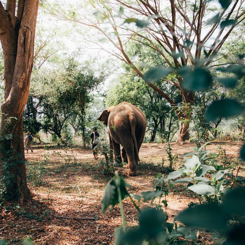 Passeio no Elephant Nature Park - Tailândia