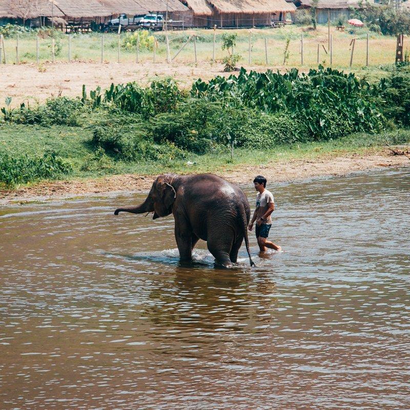 Chiang Mai, Tailândia - Pequeno elefante tomando banho