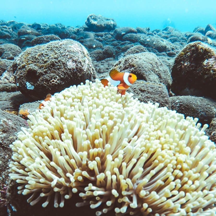 Amed, Bali, Indonésia - Snorkel