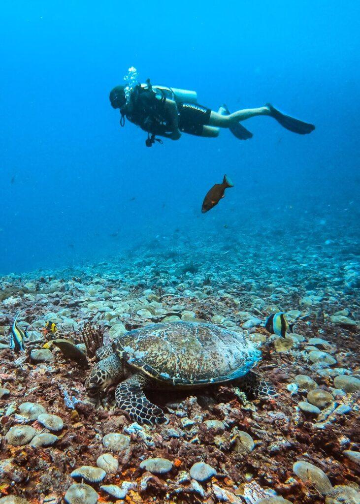 Ilhas Gili - Mergulho em Gili Air