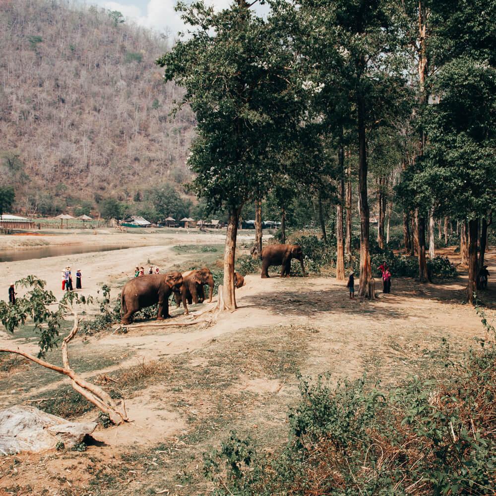 Elephant Nature Park, Chiang Mai, Tailândia - elefantes soltos
