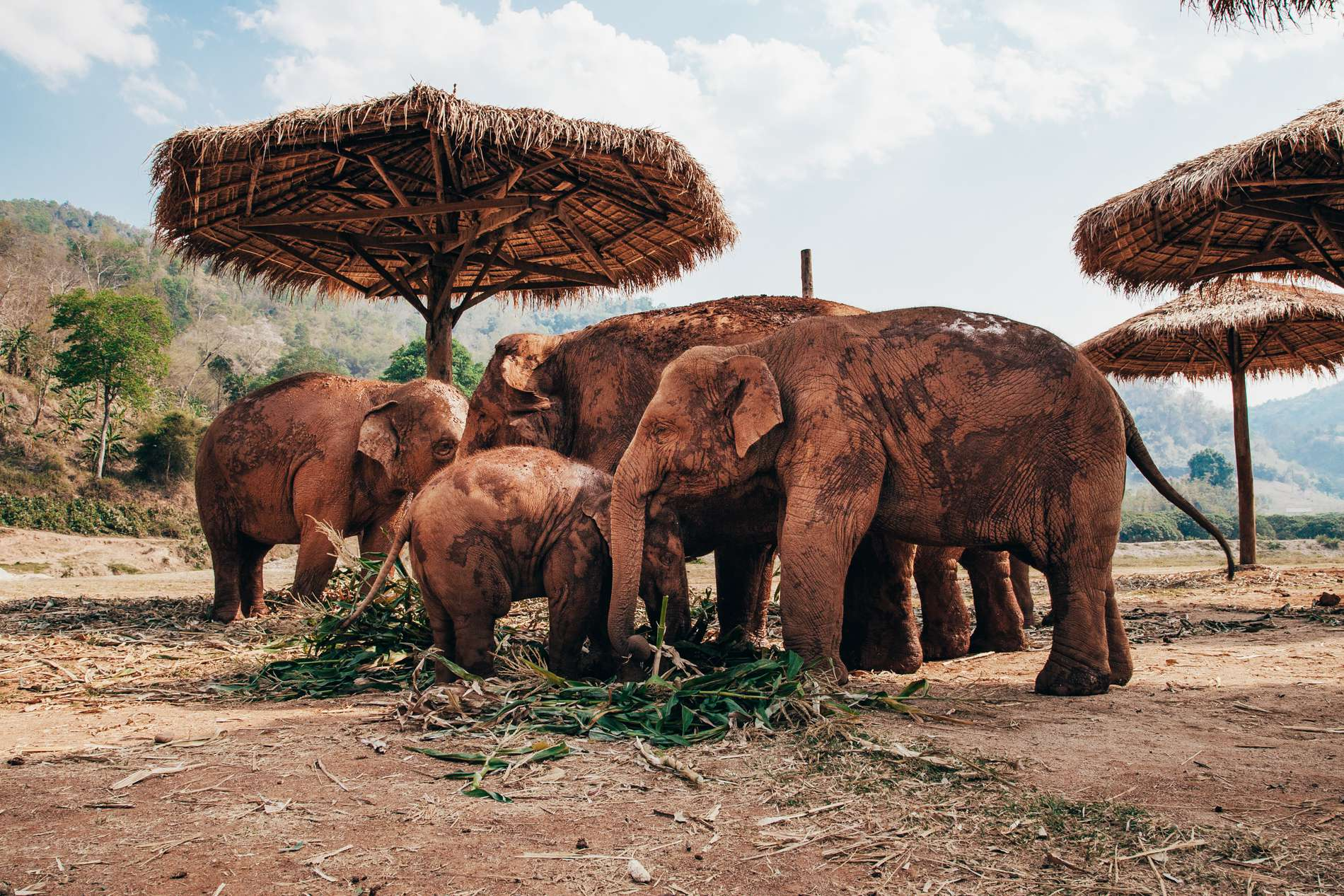 Elephant Nature Park, Chiang Mai, Tailândia - família de elefantes