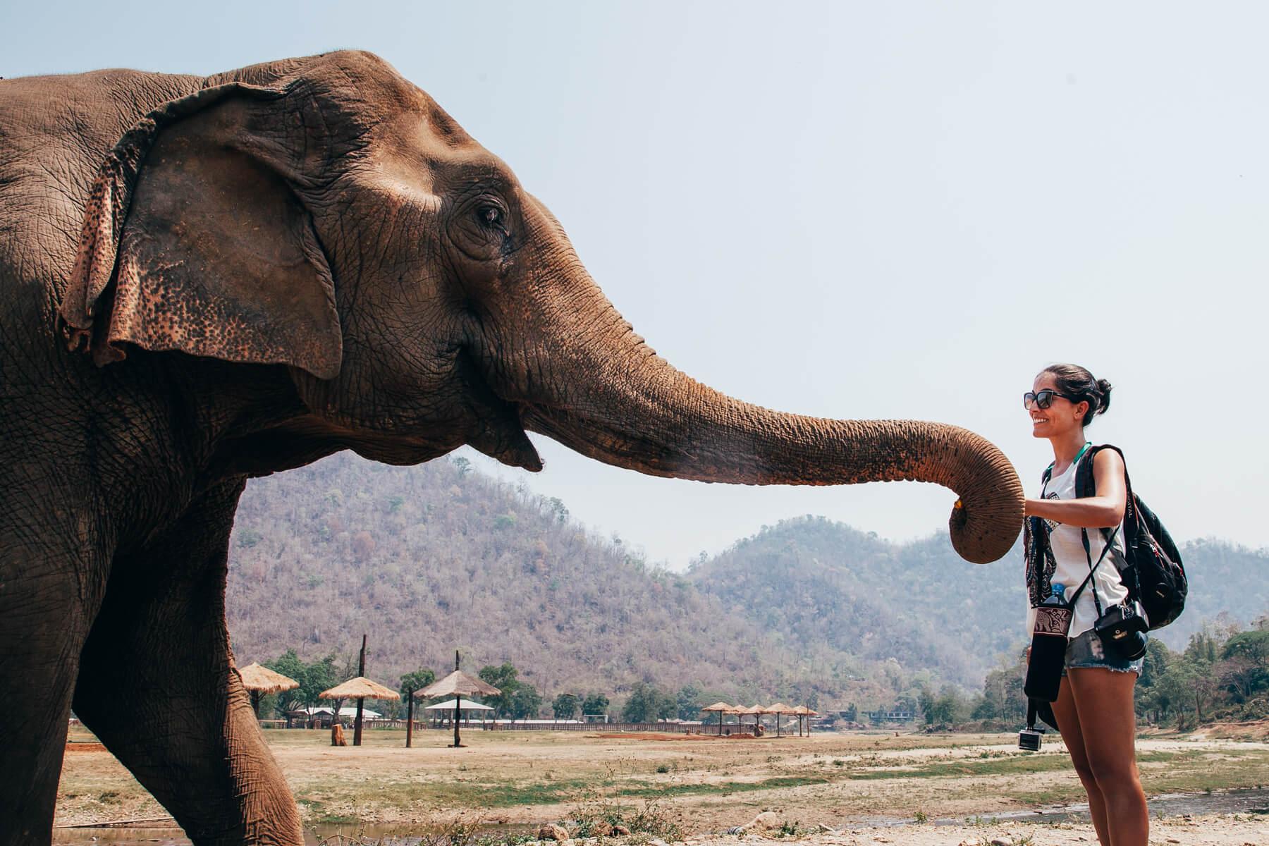 Elephant Nature Park, Chiang Mai, Tailândia - Passeio de um dia
