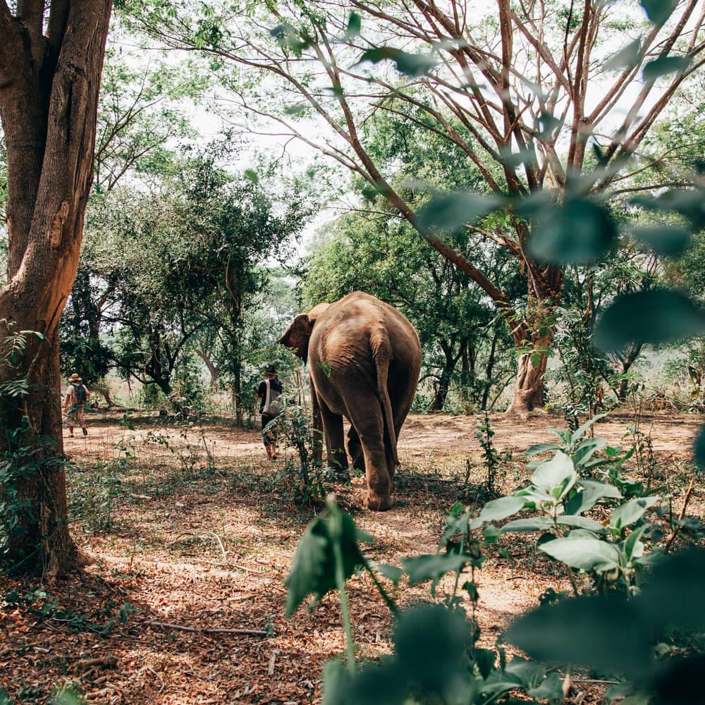 Elephant Nature Park, Chiang Mai, Tailândia - caminhada com elefante