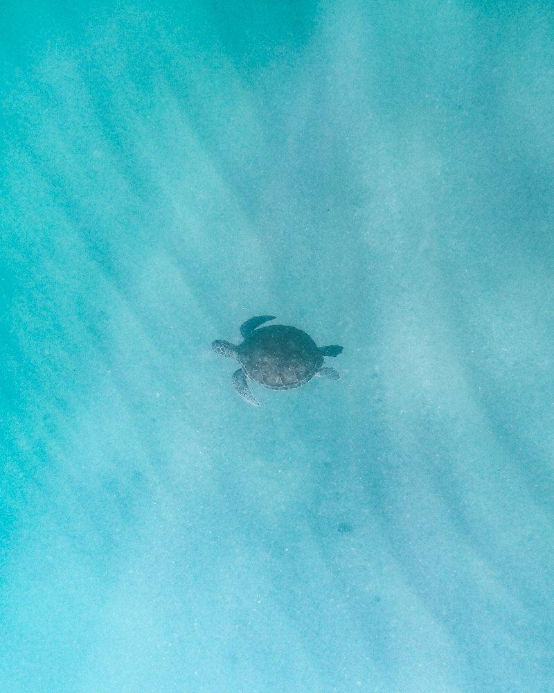Tartaruga vista na praia Graçainha
